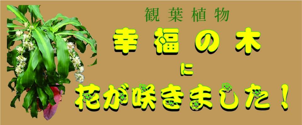 ホームページ用観葉植物